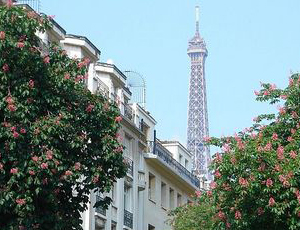 Эйфелева башня на фоне цветущих деревьев