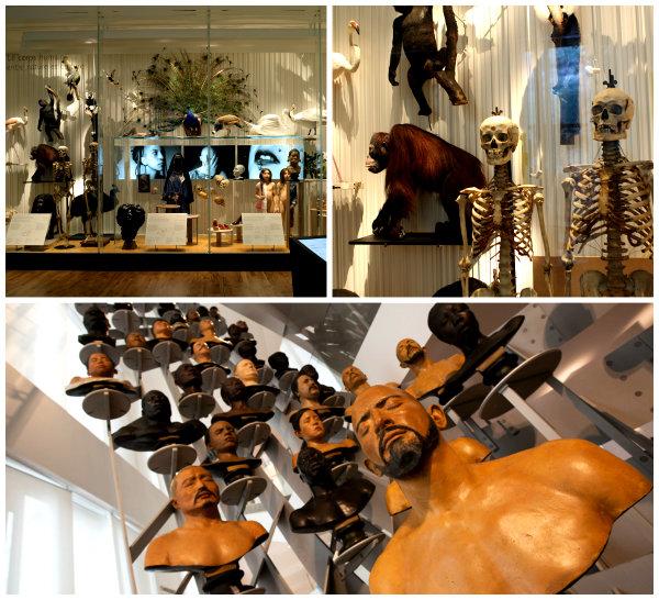 Музей Человека в Париже2